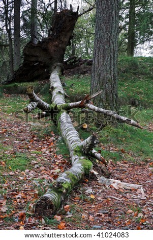Tree uprooted due to nature at Yew Tree Tarn Cumbria Uk - stock photo