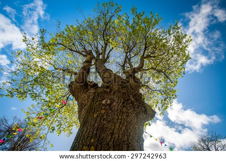 Tree with bunting - stock photo