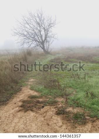 tree with fog - stock photo
