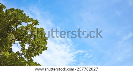 tree with green leaves on a background of blue sky with clouds. nature background - stock photo
