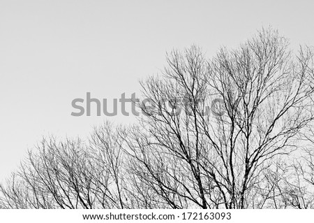 Tree with grey sky background - stock photo