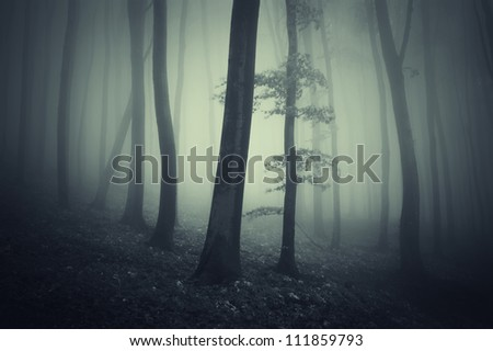 tree with leafs in dark forest - stock photo