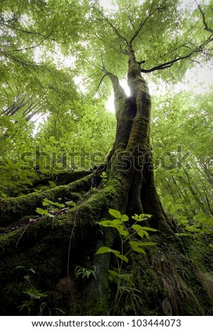 tree with moss in a green forest - stock photo