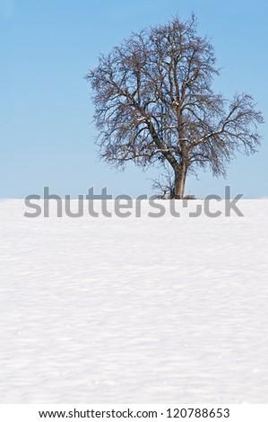 tree with snow - stock photo