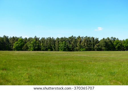 Treeline behind a summer field. - stock photo