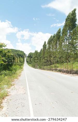 Treelined country road - stock photo
