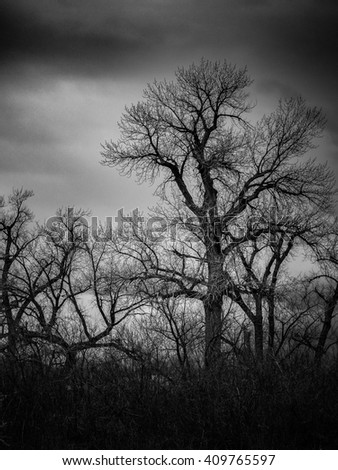 Trees Against the Stormy Sky in Black and White - stock photo