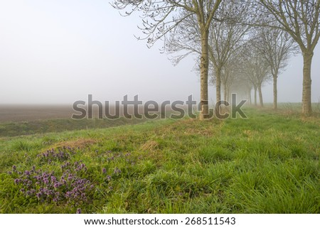 Trees along a foggy field in spring - stock photo