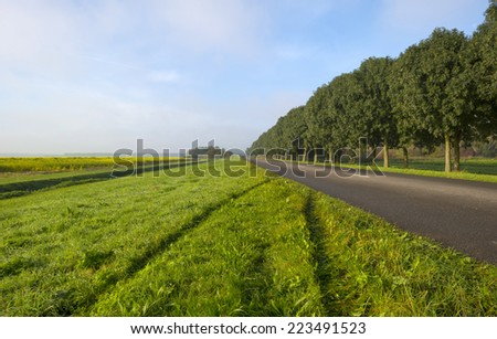 Trees along a road through the countryside - stock photo