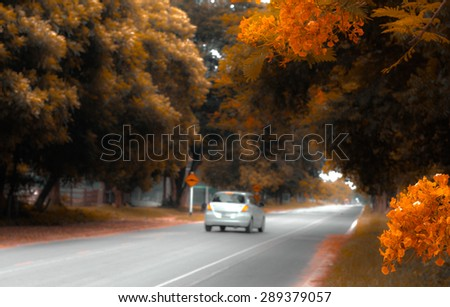 Trees and flower on the road in autumn season, vintage color tone  - stock photo