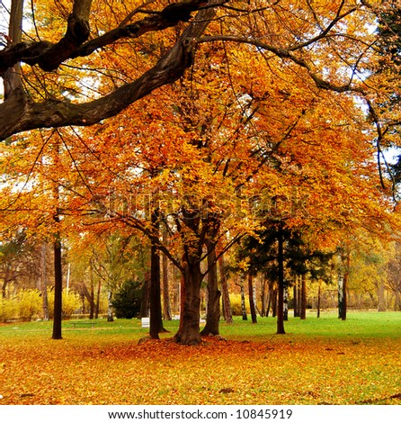 Trees and leaves at the park - stock photo