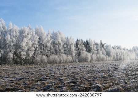 Trees and the field covered with hoarfrost on a sunny frosty day - stock photo