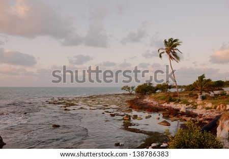 Trees at Florida Keys islands at sunrise. Florida Keys, USA. - stock photo