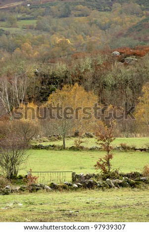 Trees at green pasture at Northeastern Portugal - stock photo