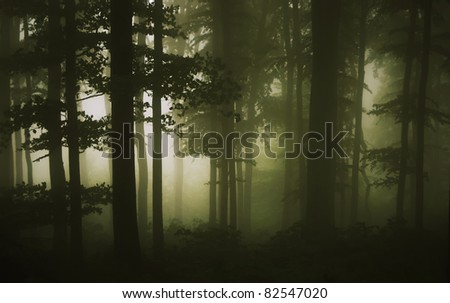 trees at the edge of the forest on a rainy summer day - stock photo