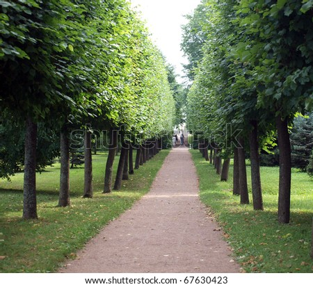 Trees avenue - stock photo