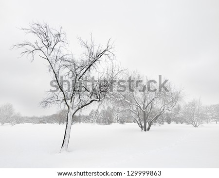 Trees covered by snow, in the mist of winter blizzard. - stock photo