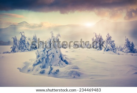 Trees covered with hoarfrost and snow in mountains. Foggy sunrise.  - stock photo