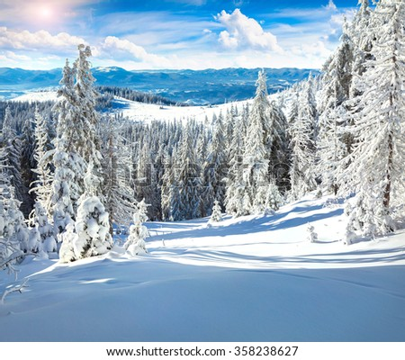 Trees covered with hoarfrost and snow in the Carpathian mountains. Sunny winter scene in the woodland. - stock photo