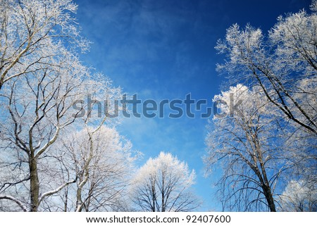 Trees covered with ice in winter - stock photo