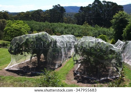 Trees covered with net in the orchard - stock photo
