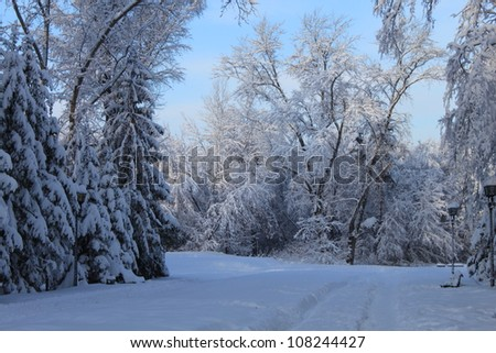 Trees covered with snow - stock photo