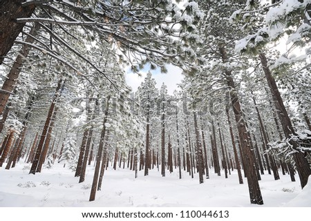Trees covered with snow in mountains during winter time - stock photo