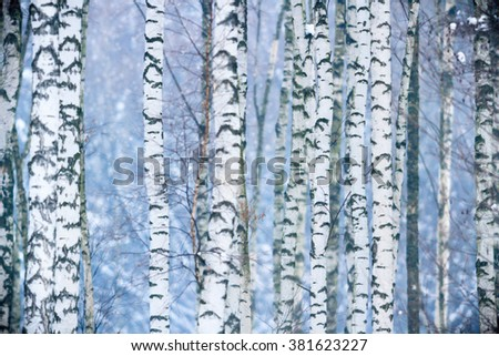 trees covered with snow in winter forest, nature series - stock photo