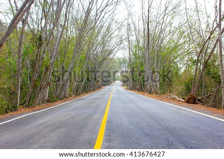 Trees covering the road - stock photo
