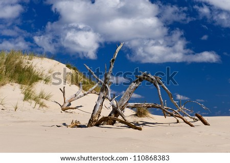 trees dried off on sand dunes of the desert - stock photo