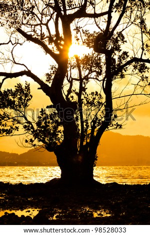 Trees evening with golden light - stock photo