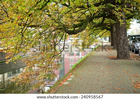 Trees extending their branches over the river in The Hague, Netherlands - stock photo