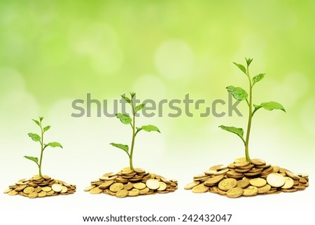 trees growing on golden coins / business growth with csr - stock photo