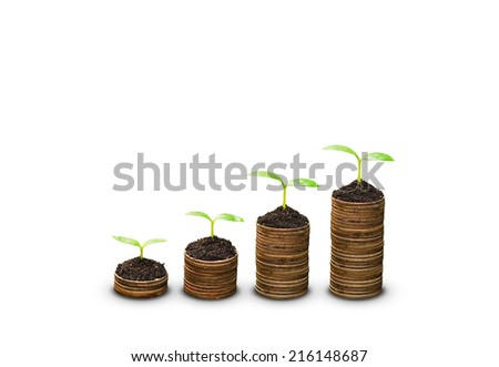 trees growing on stack of coins on isolated background / business with crs concept - stock photo