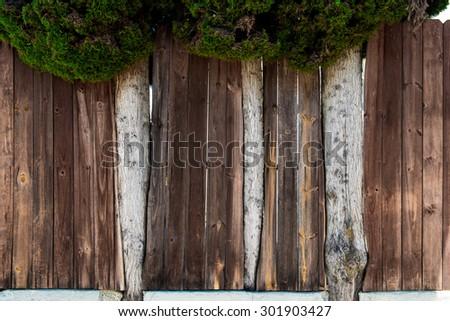 Trees grown through fence background - stock photo