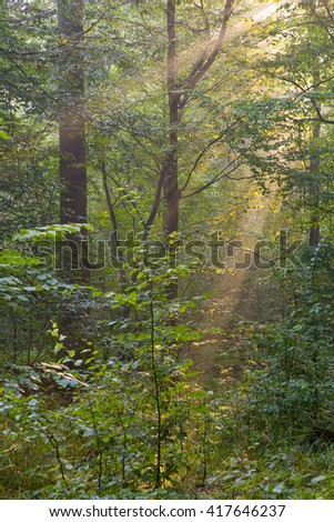 Trees in a soft early morning light, deciduous stand of Bialowieza Forest,Poland,Europe - stock photo