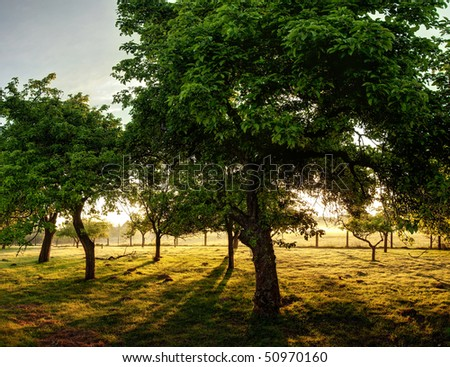 Trees in an old orchard on a sunny day in the countryside. - stock photo