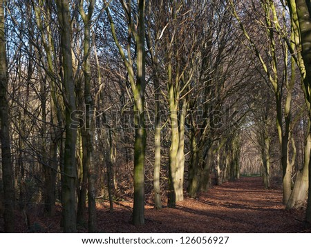 Trees in autumn at sunset - stock photo