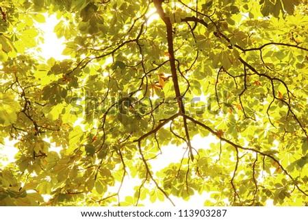 trees in autumn feeling - stock photo