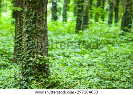 Trees in beautiful green forest - stock photo