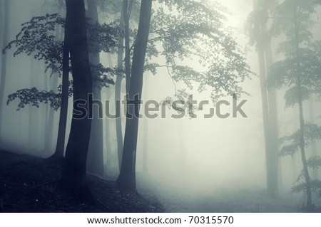 trees in counter light in a forest - stock photo