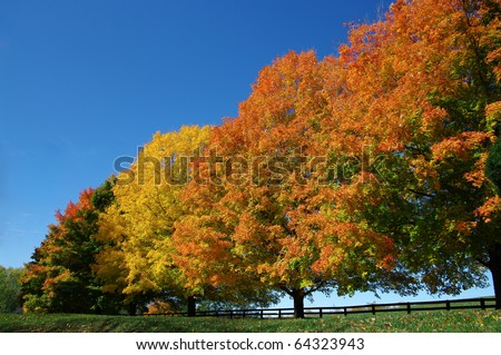 Trees in Fall Colors - stock photo