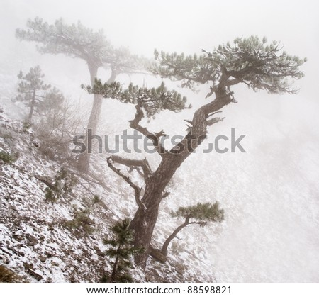 trees in fog in mountains - stock photo