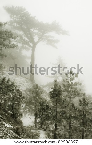trees in fog in winter mountains - stock photo