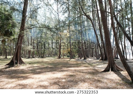 Trees in Forest - stock photo