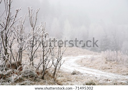 Trees in misty haze in a gloomy winter day. Pasterka village in Poland. - stock photo