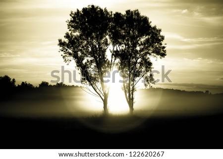 trees in morning sun - stock photo