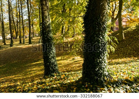 trees in park in autumn with yellow and orange leaves - stock photo