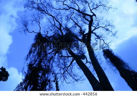 Trees in Rainforest - stock photo