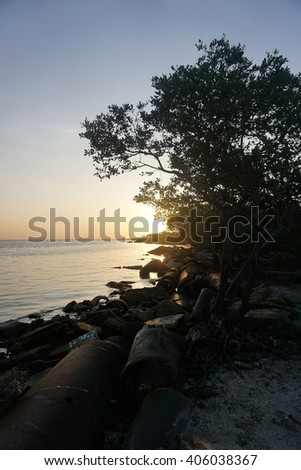 Trees in silhouette with sunrise/Gulf of Mexico Sunrise/Early morning at the Gulf of Mexico St,Petersburg - stock photo